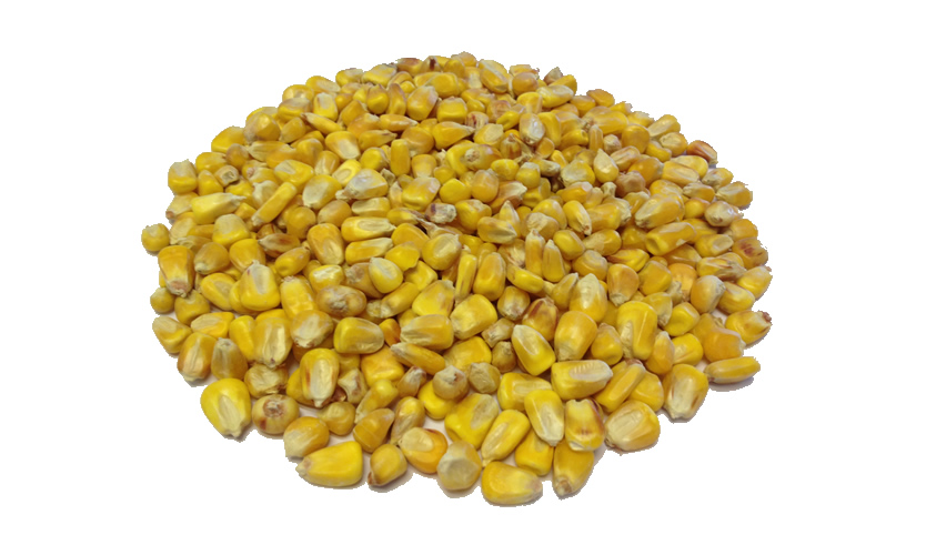 Glasson-Whole-Maize-Large
